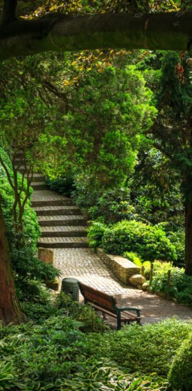 arboretum szmigieldesign  MG